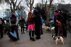 لماذا يشتعل سباق الكلاب في مدريد؟
