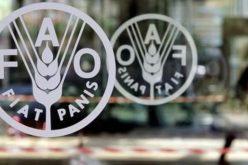 """""""فاو"""" إستقرار أسعار الأغذية العالمية"""