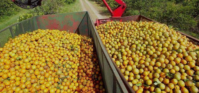 أعلى إنتاج للبرتقال في تونس ينتظر التسويق