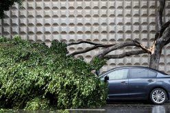 عاصفة تضرب غرب أمريكا..والكهرباء تنقطع في شمالها !