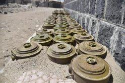 """""""التحالف اليمني"""": 2258 حالة تضرر بشرية ومادية بسبب ألغام ميليشيا الانقلاب"""