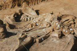 اكتشاف حفرية كائن قريب للديناصورات لكن مختلف الشكل