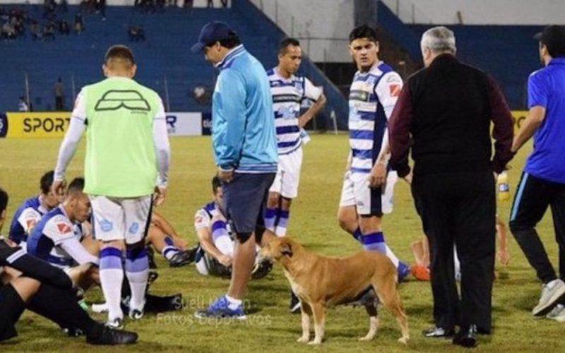 """""""كلبة ضالة"""" تشغل منصب مساعد مدرب في الباراغواي"""