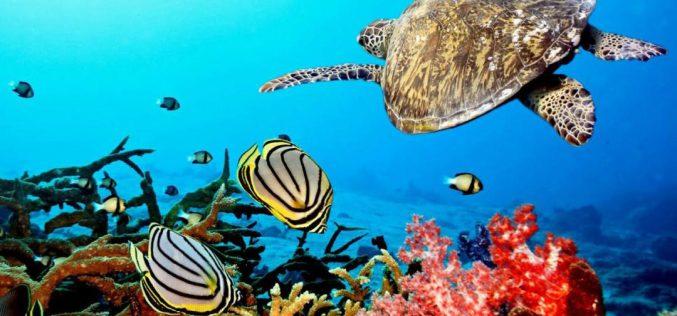 دراسة: 17 في المئة من الحيوانات البحرية قد تختفي بحلول عام 2100م